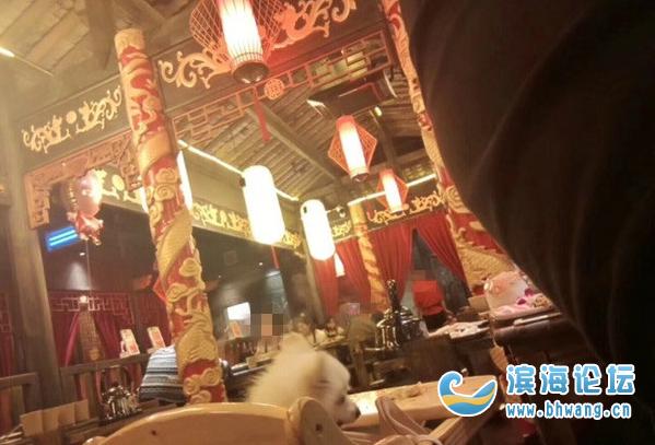 某火锅店内恶心一幕!狗坐宝宝椅吃东西!人狗同食?