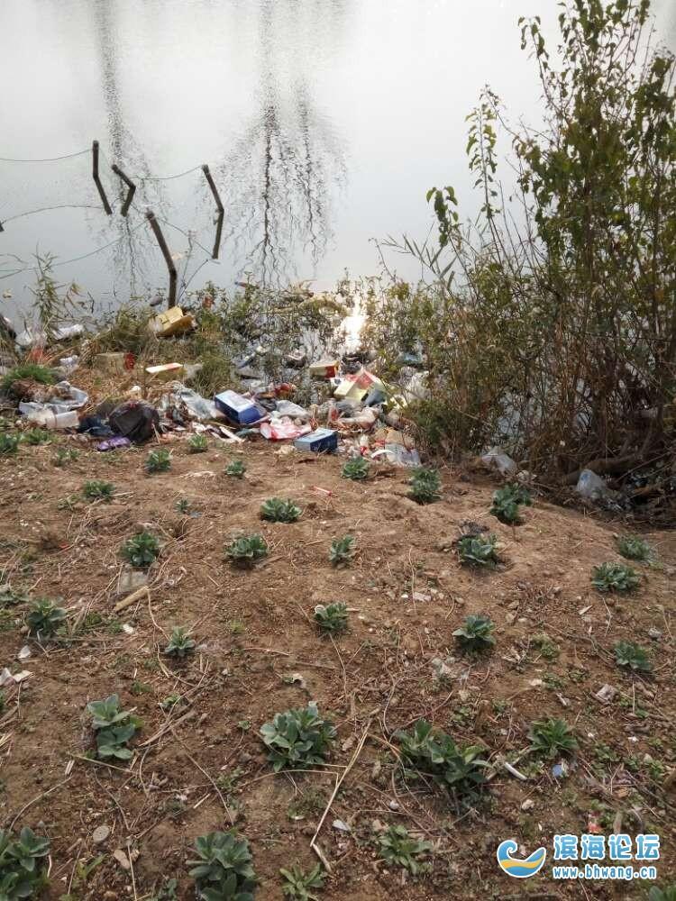 条洋村的垃圾真的很不错啊一年二年还是这个样子