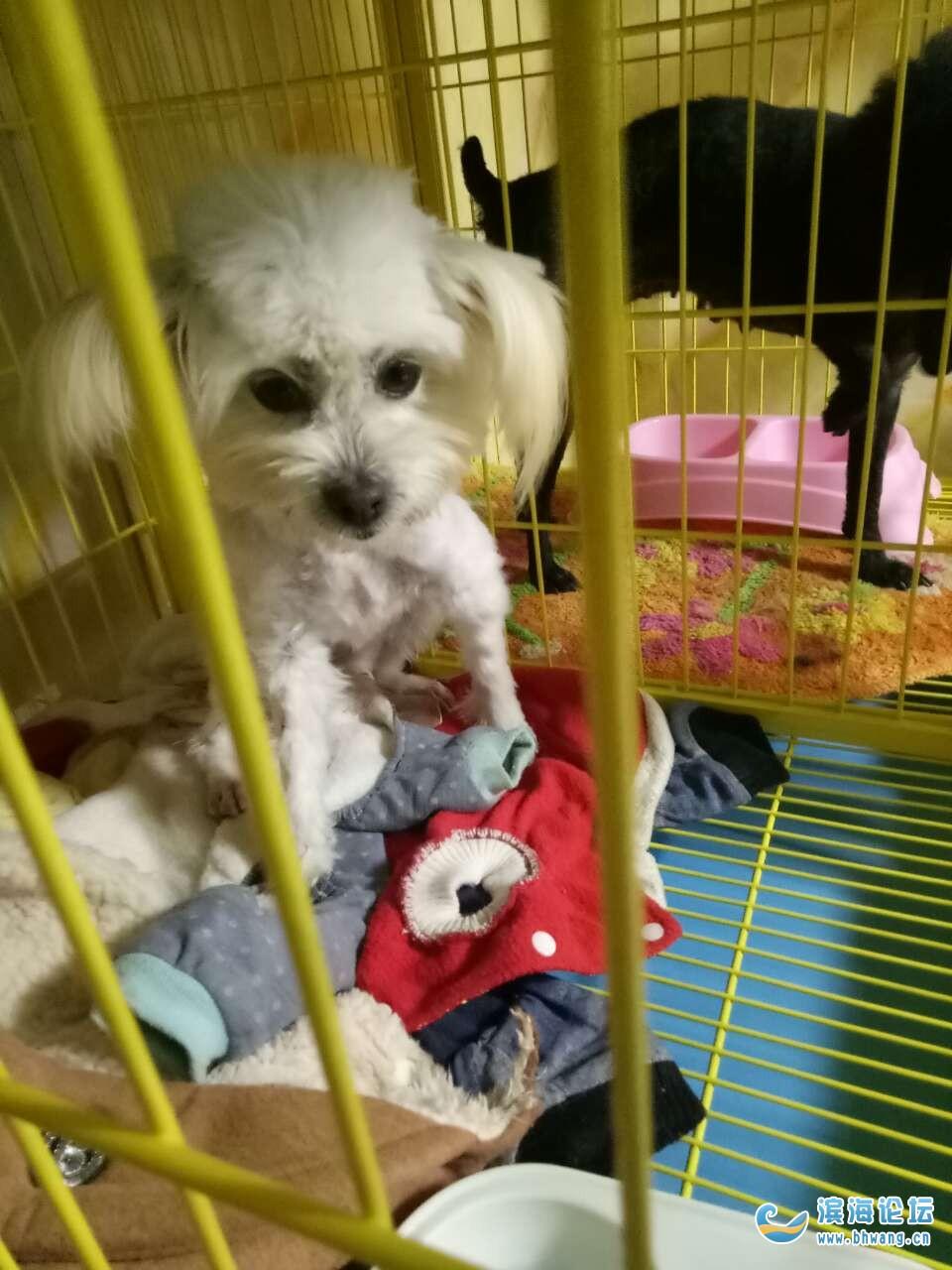 小狗免费领养