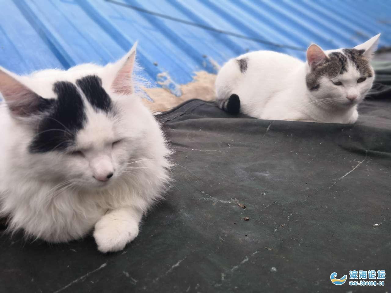 两只小花猫,原丢失地点:县政府附近,现不详,希望有好心的哥哥姐姐看到的,请与我联系18762520076,让两个宝贝早点回家。