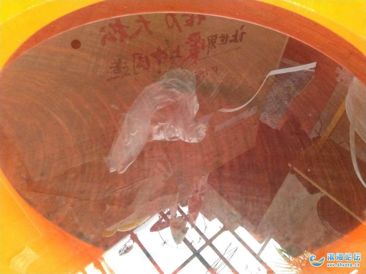 传说中的蚬木菜板
