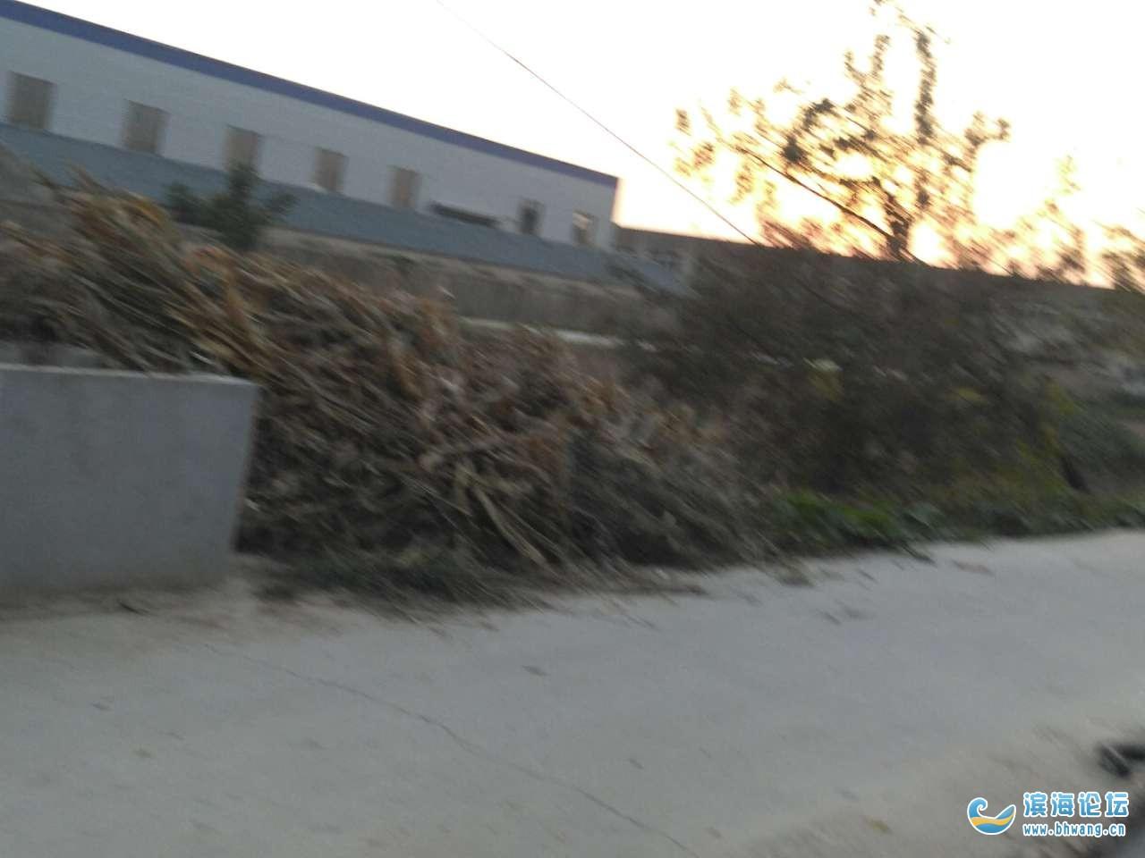 垃圾池变秸秆堆放场