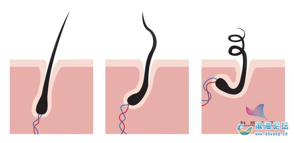 着急!一天掉多少根头发算脱发?别慌,科学的解释来了……
