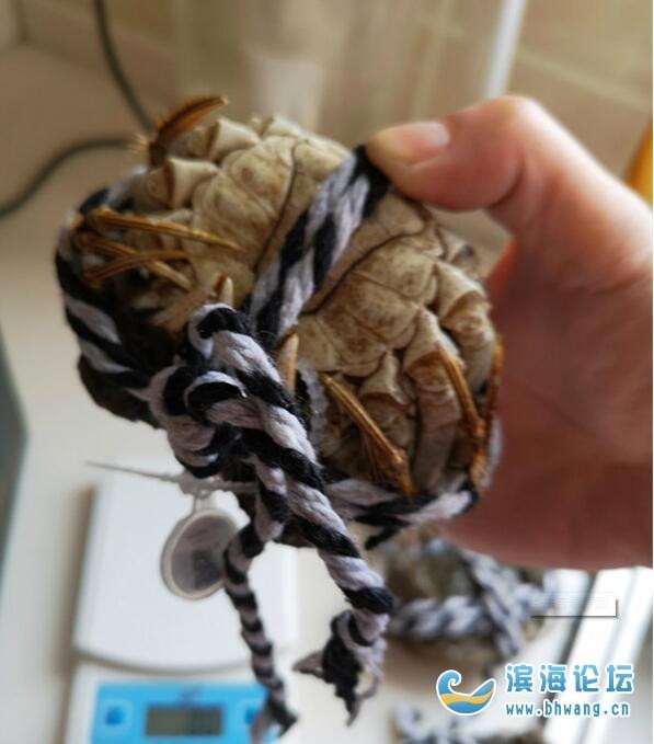天猫超市真牛!买了3两母蟹,然鹅拿掉绳子一称,只有1两多一点点...