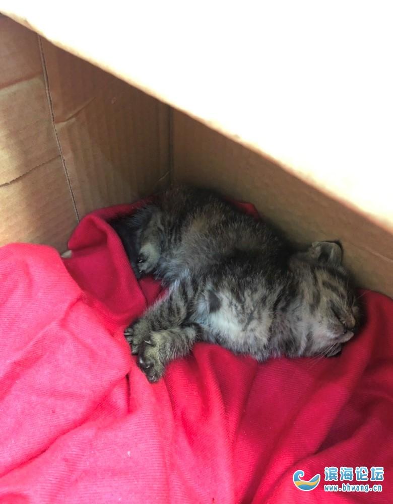 滨海哪里有流浪猫收容所,急等!捡到一只流浪猫,真的很可怜的样子