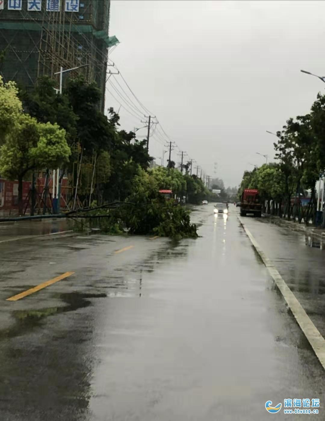 永寧路樹刮倒了也沒人問了