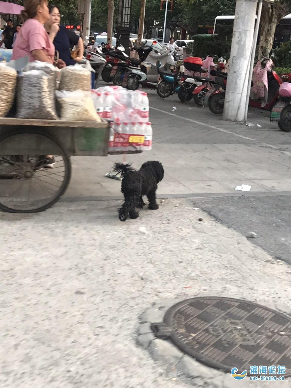 谁家的狗丢了?