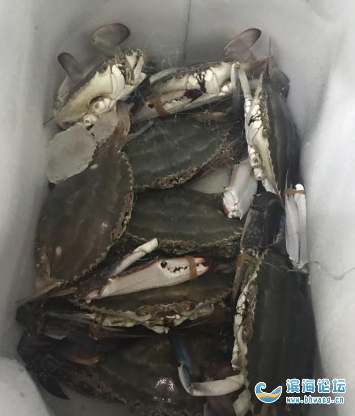 哪里有卖活的梭子蟹?