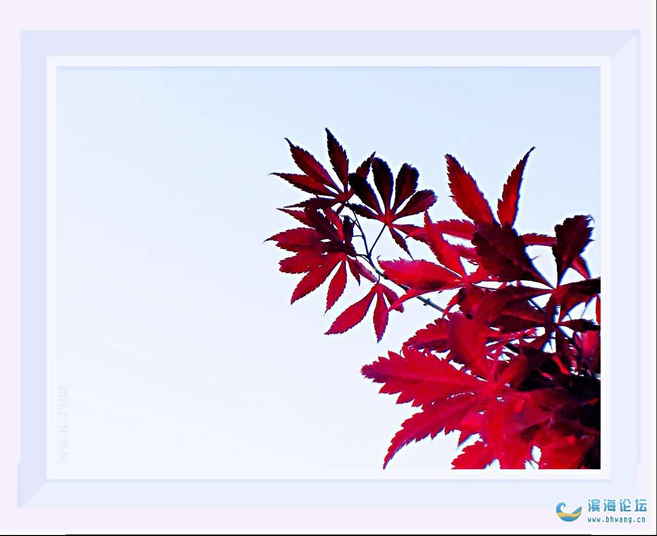 秋叶红于二月花