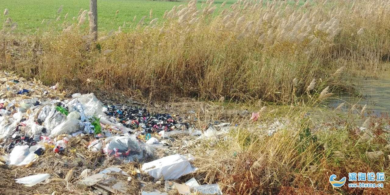 儿时记忆中荷塘现为何变成了垃圾填埋场?