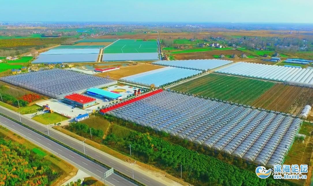產業化+品牌化!濱海奮力推動農業高質量發展……