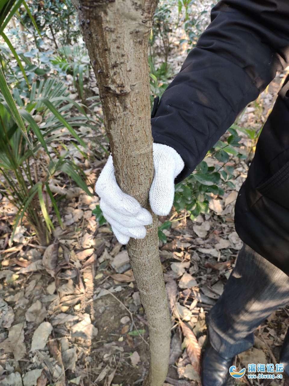 長了十幾年的果樹經由政府指定的評估公司得出結論五元,心寒啊