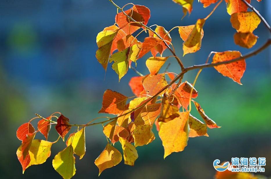 秋葉落盡!我在初冬的濱海等你……