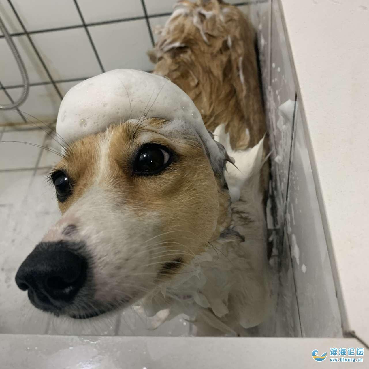 重金寻狗:请问国道旁边有个狗厂在哪里?