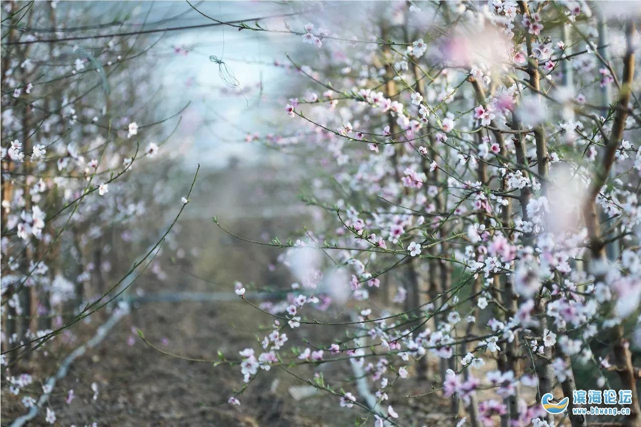 疫情過后,春暖花開的濱海與你再次相約!