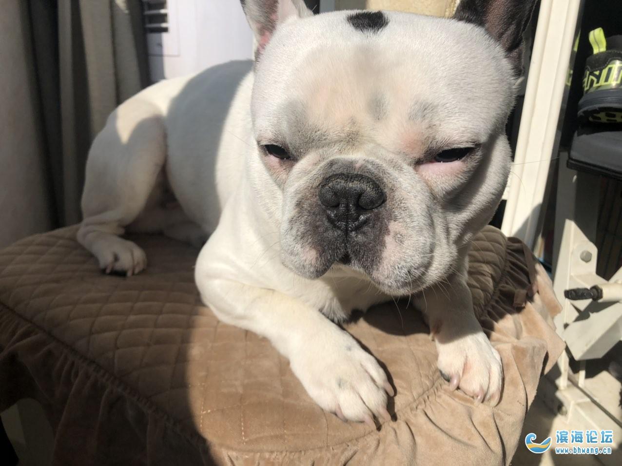 1000元现金奖励寻找狗狗