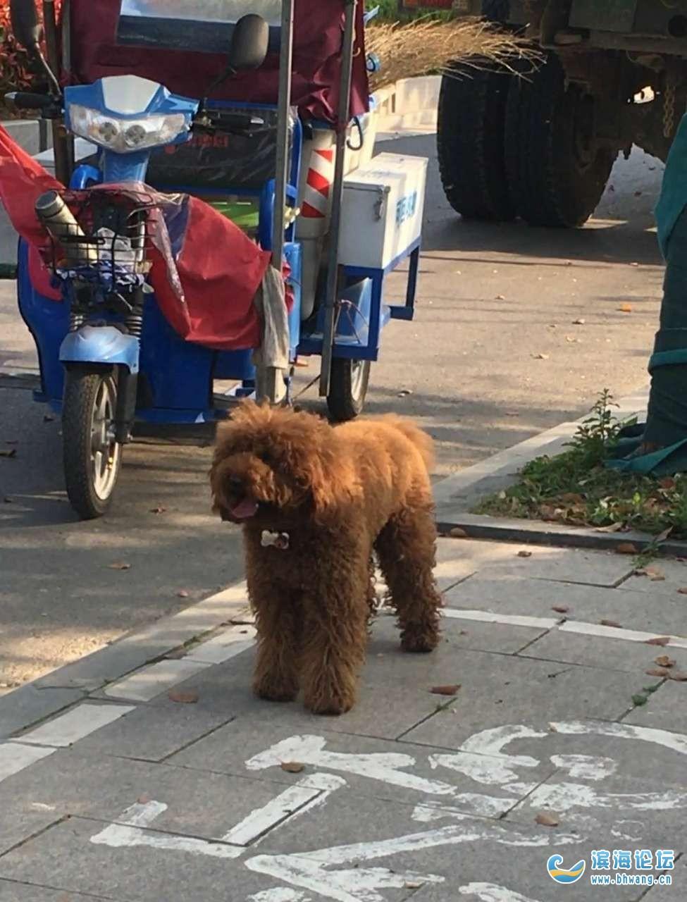 尋找愛犬,急