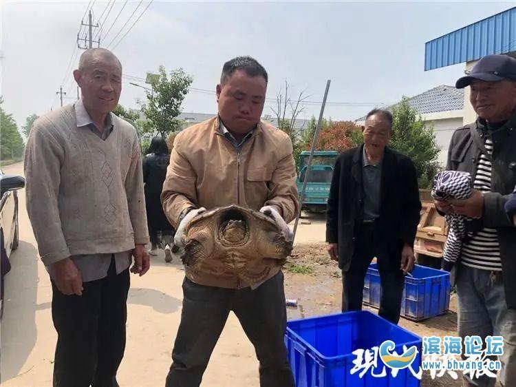 28斤!盐城渔民捕获一只大龟,水产专家:至少100岁了