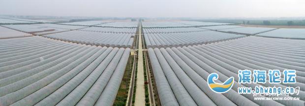 濱海堅持農業強縣發展戰略,打造了一批集中連片的農產品種養加工基地