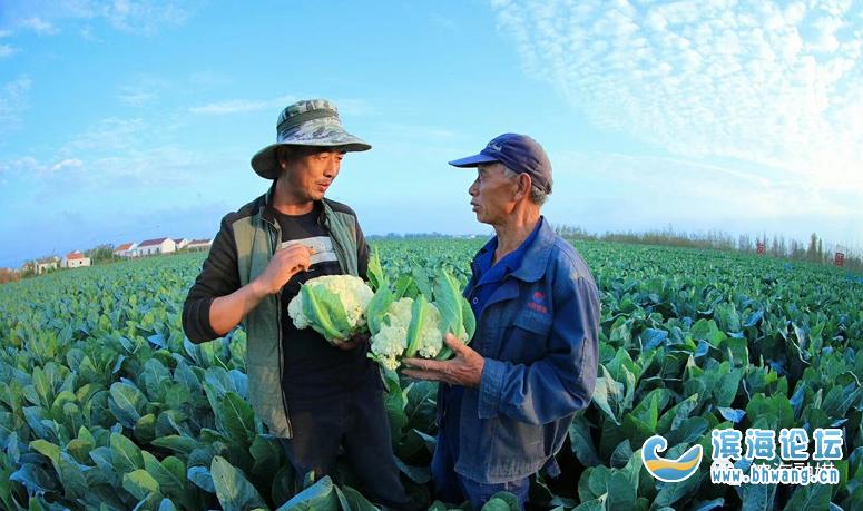 【推薦】多措并舉!濱海有效激發強農富民新活力……