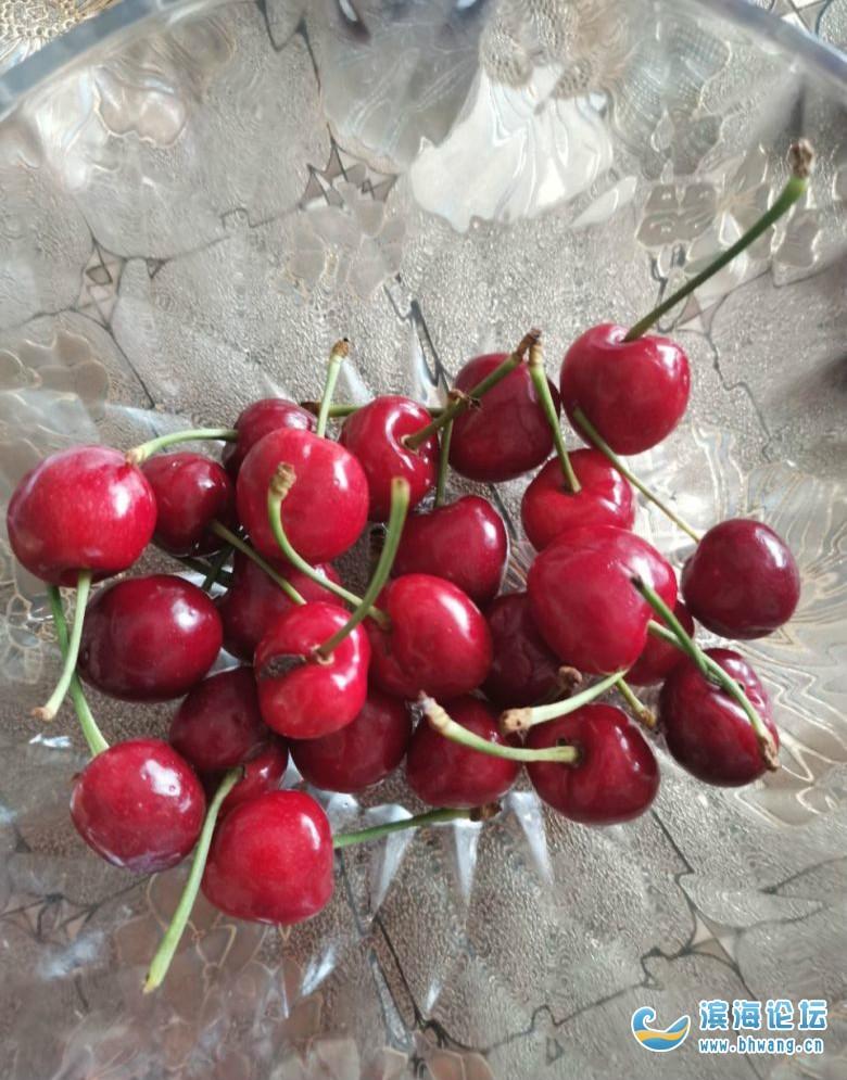 很多人喜歡吃櫻桃,自從偶然間搬開一個,看到里面有蛆一樣的蟲子