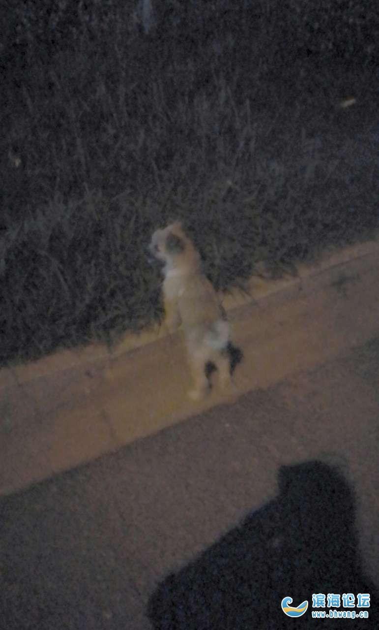 小狗6月4晚上9点多在幸福小区门口超市跑丢了,望好心人还给我们家