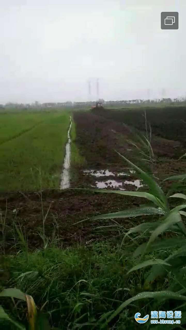 我家位于348省道南侧2~3亩良田被人用挖掘机强行挖掉