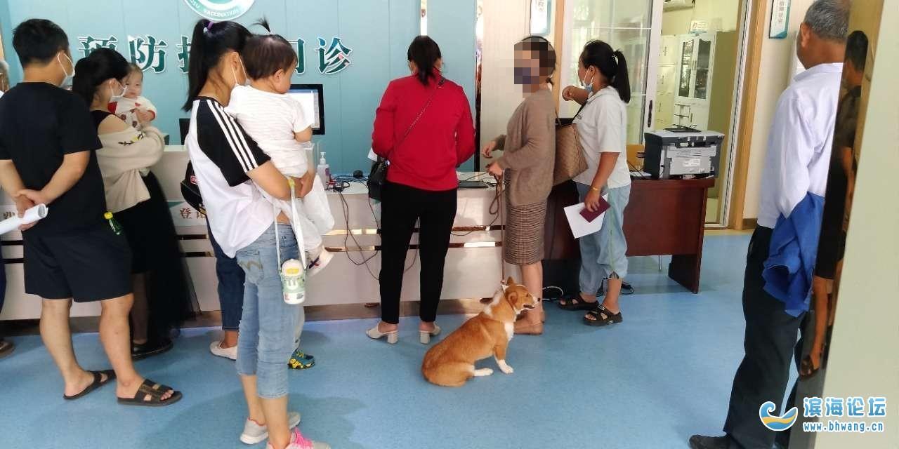 小孩打疫苗,2條狗,一個牽繩子,一個不牽繩